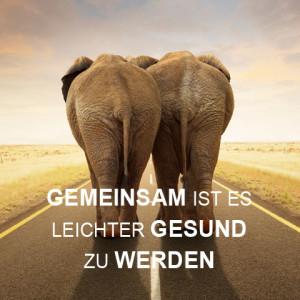 elefant-shg